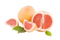 röda grapefruktdelar Royaltyfria Bilder