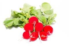 röda grupprädisor Arkivfoto