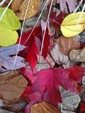 Röda gula nedgånghöstsidor med gräs Arkivfoto