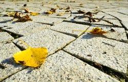 Röda, guld- och bruna sidor för guling, på jordningen Arkivfoto