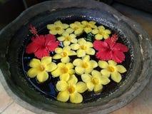 Röda Gumamela och gulingCalachuchi blommor arkivfoton