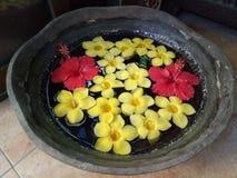 Röda Gumamela och gulingCalachuchi blommor fotografering för bildbyråer