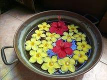 Röda Gumamela och gulingCalachuchi blommor arkivbilder