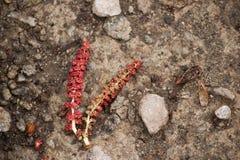 Röda hängear på våren Royaltyfria Bilder