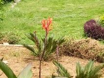 Röda härliga blommor Arkivfoton