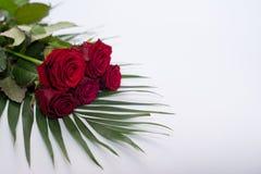 Röda härliga blommor på vit Bukett av ro red steg royaltyfri fotografi