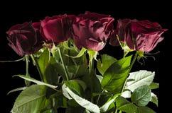 Röda härliga rosor i svarten annullerar royaltyfri foto