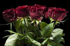 Röda härliga rosor i svarten annullerar Fotografering för Bildbyråer