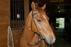 Röda hästkostnader i ett stall Royaltyfri Bild