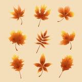 Röda höstsidor Royaltyfri Fotografi