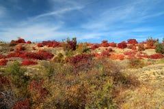 Röda höstsidor i solen arkivfoton