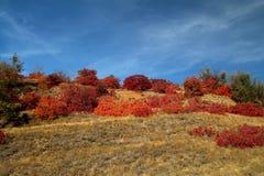 Röda höstsidor i solen royaltyfri foto