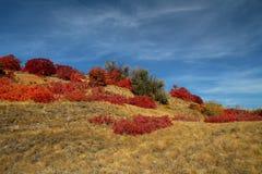 Röda höstsidor i solen fotografering för bildbyråer