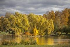 Röda höstsidor på backgroundReflection för blå himmel av träd i den guld- hösten i dammet och den molniga himlen för regnet royaltyfri fotografi