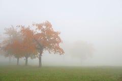 Röda höstträd i ett dimmigt fält Arkivfoton