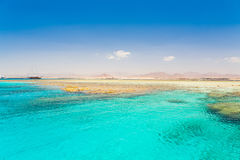 Röda havetdag Royaltyfria Bilder
