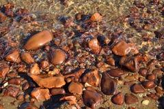 Röda havetkiselstenar Fotografering för Bildbyråer
