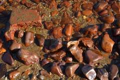 Röda havetkiselstenar Royaltyfri Bild