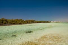 Röda havetkust Arkivbild