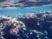 Röda havetshower Arkivfoto