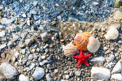 Röda havetstjärna, havsskal, stenstrand, rent vatten Arkivfoton