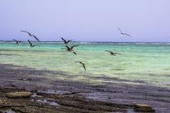 Röda havetstrandRöda havet Egypten Arkivbild