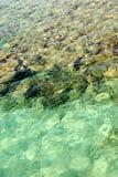 Röda havetyttersida Fotografering för Bildbyråer