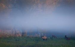 Röda hjortar och hindar i skog Arkivfoton