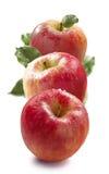 Röda honungknastrandeäpplen som är vertikala på vit bakgrund Royaltyfria Foton