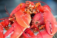 röda hummer Royaltyfri Fotografi