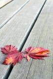 Röda japanska lönnlöv på Wood bänkbakgrund Arkivbild