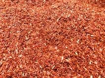 Röda jasminris i hinken Arkivfoto