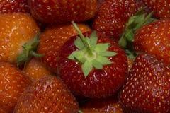 röda jordgubbar Royaltyfri Fotografi