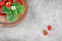 Röda jordgubbar i bästa sikt för röd kruka Royaltyfri Fotografi