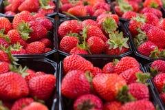 Röda jordgubbar i bakgrund för svarta askar Fotografering för Bildbyråer