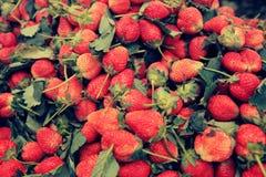 Röda jordgubbefrukter Royaltyfri Foto