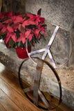Röda julstjärnablommor med tecknet för fred för stenvägg och järn royaltyfri bild