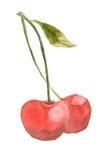 Röda körsbär bär frukt på vit, vattenfärgmålning Arkivbilder