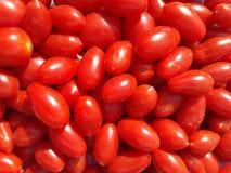 Röda körsbärsröda tomater royaltyfria foton