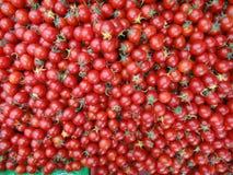 Röda körsbärsröda tomater visar att hur nytt de är arkivfoton