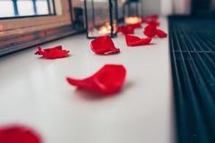 Röda kronblad av rosor royaltyfri fotografi