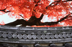 Röda lönnlöv och gammal tempel, Kyoto Japan arkivbilder