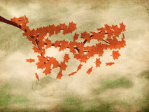 Röda lönnlöv på grungebakgrund Royaltyfri Bild