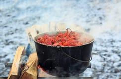 Röda languster låter småkoka i en kruka över branden under en picknick royaltyfri bild