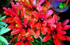 Röda Leavegarden Arkivfoton
