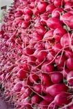 röda marknadsrädisor Royaltyfri Foto
