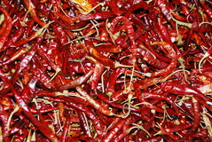 röda mexikanska peppar Royaltyfria Foton