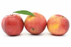 Röda mogna äpplen Jonagold som isoleras på vit bakgrund Arkivbilder