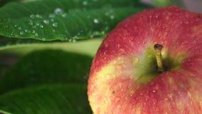 Röda mogna Apple bevattnade lager videofilmer