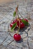 Röda mogna Cherry Royaltyfri Bild